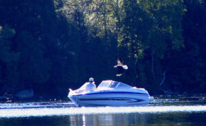 speed boat with bald eagle overhead